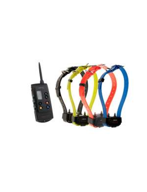 pack reconditionné Canicom 1500 avec 4 colliers